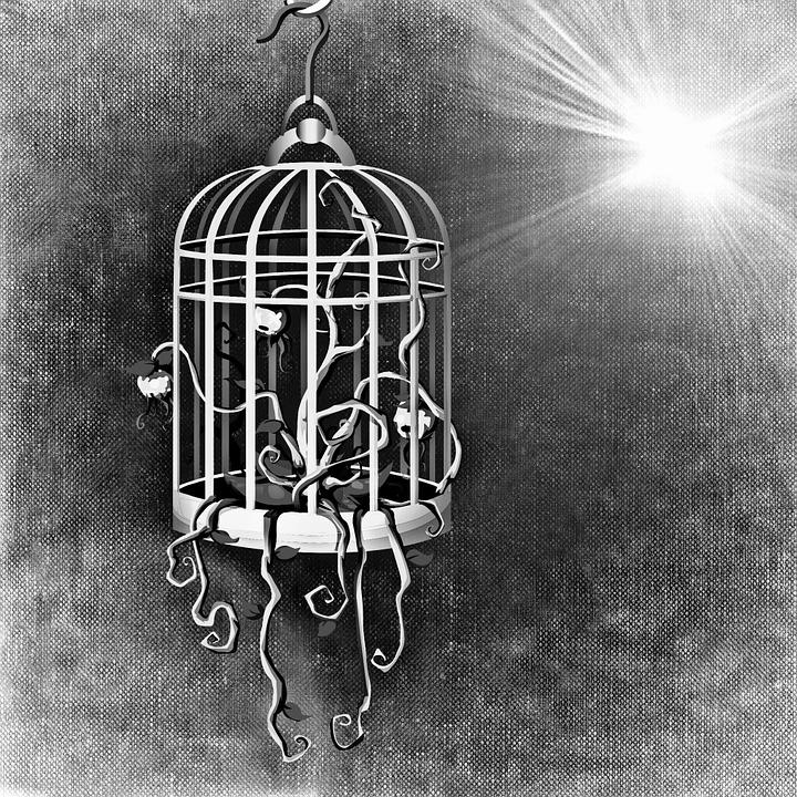 bird-cage-687693_960_720.jpg
