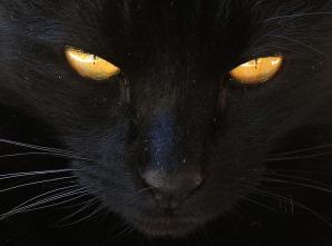 cat-2540940_960_720